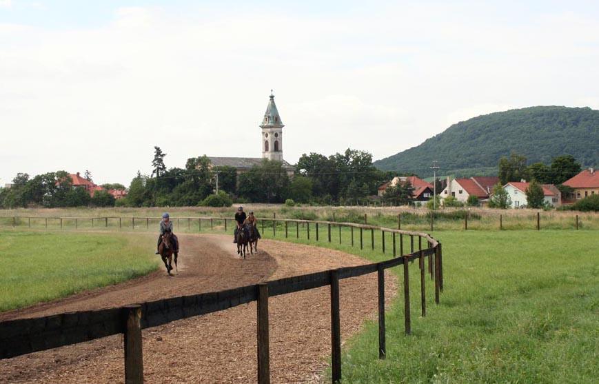 Tréninkové centrum DARHORSE